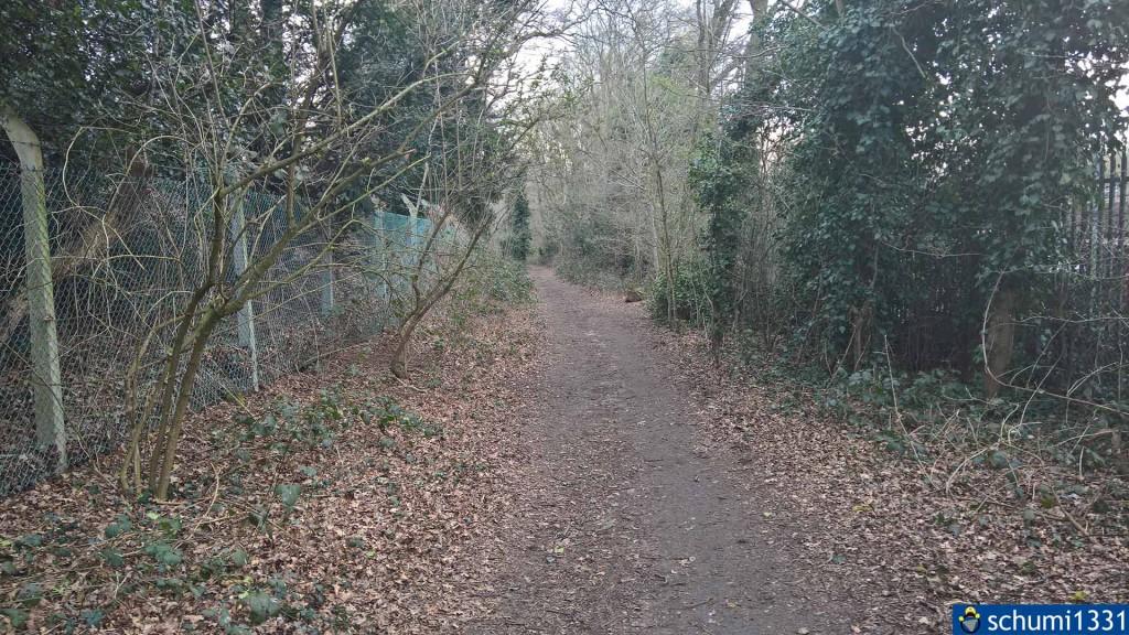 Ein kleiner Waldweg